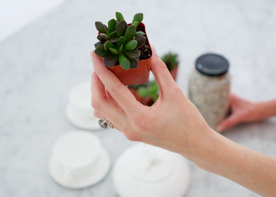 Eva Amurri Martino of the Happily Eva After blog displaying a mini succulent being used for a DIY Teacup Planters craft feature