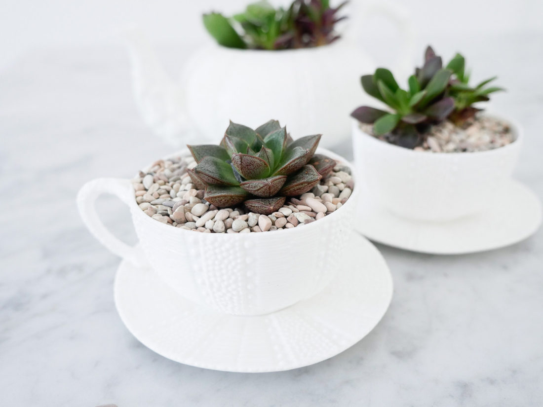 DIY teacup planters featuring small succulents surrounded by tiny pebbles in a white china tea cup on the Happily Eva After blog by Eva Amurri Martino