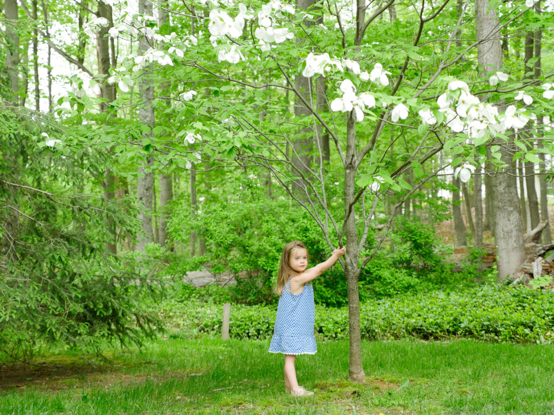 Marlowe Martino hands from a dogwood tree near her family home in Connecticut
