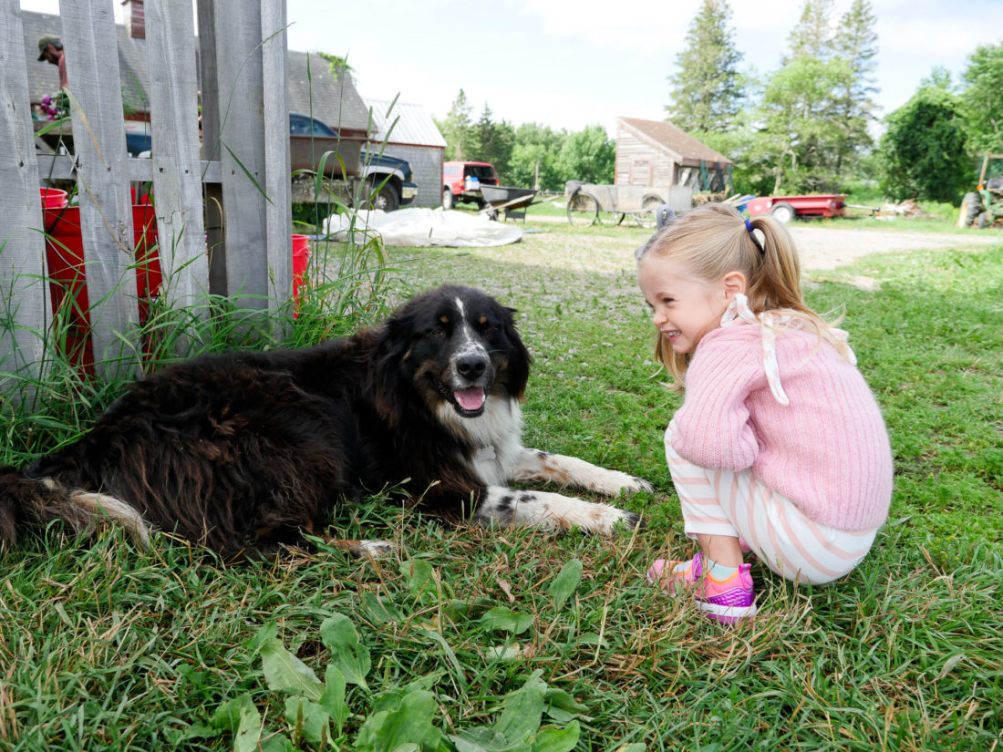 Marlowe Martino plays with a dog at Beech Hill Farm in Maine