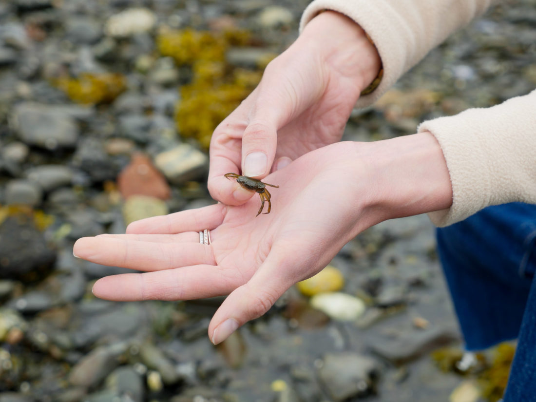 Eva Amurri Martino finds a tiny crab in a tidal pool on the beach in Maine