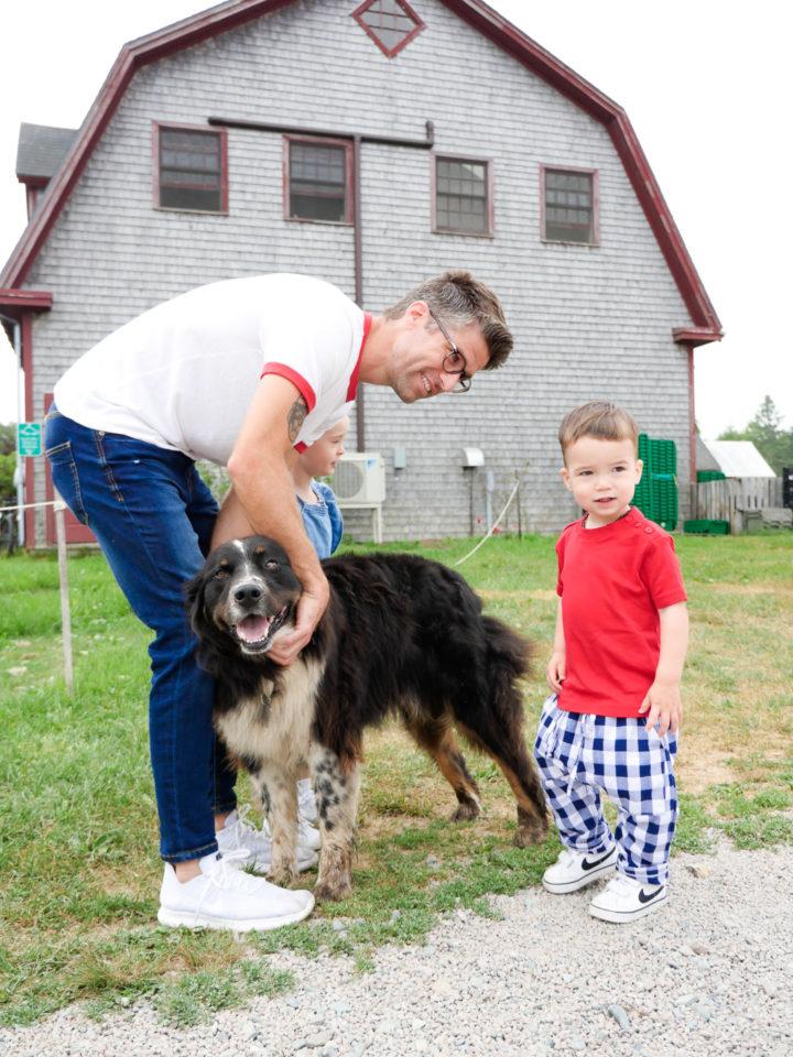 Eva Amurri Martino's husband Kyle and son Major pet a dog in Bar Harbor, ME.