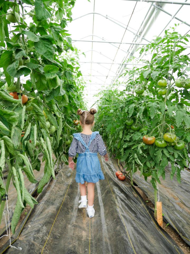 Eva Amurri Martino's daughter Marlowe walking in a field of sunflowers in Bar Harbor, ME.