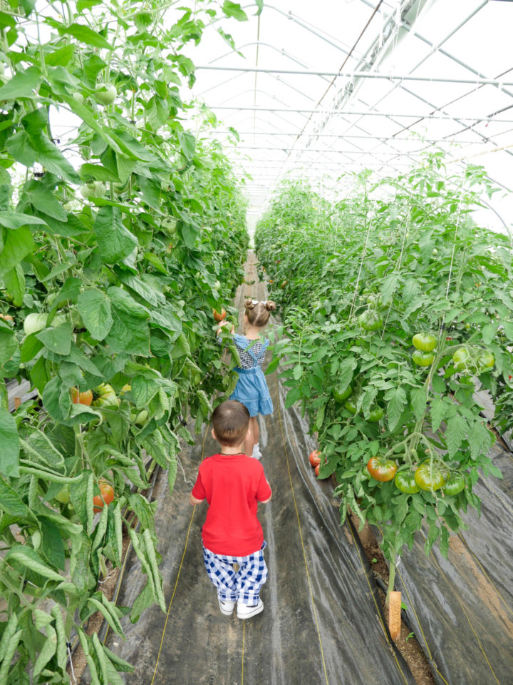 Eva Amurri Martino's kids Marlowe and Major walking in a field of sunflowers in Bar Harbor, ME.