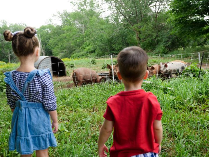 Eva Amurri Martino's kids Marlowe and Major look out at pigs in Bar Harbor, ME.