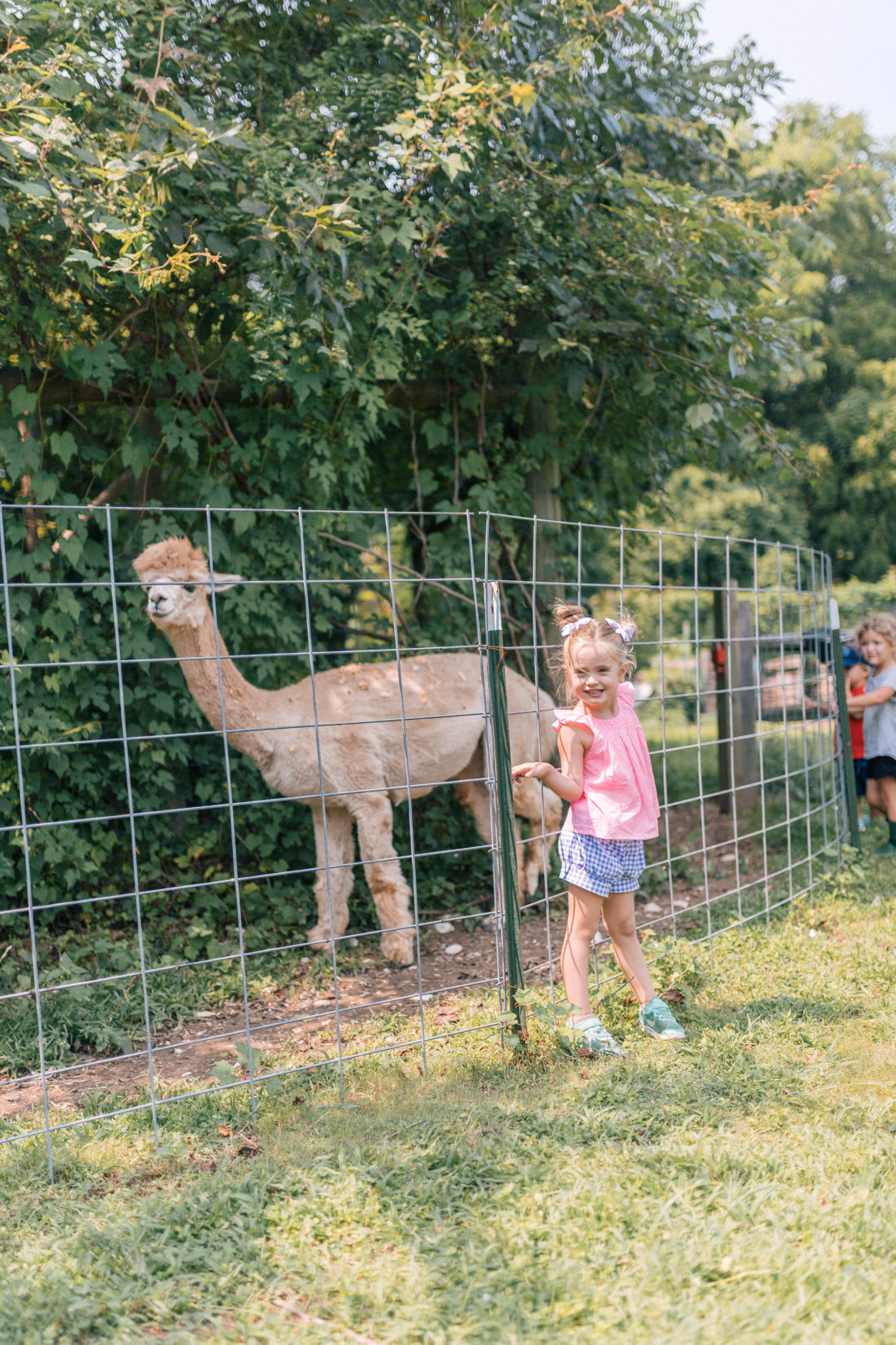 Marlowe Martino stands in front of an alpaca pen at a local connecticut farm