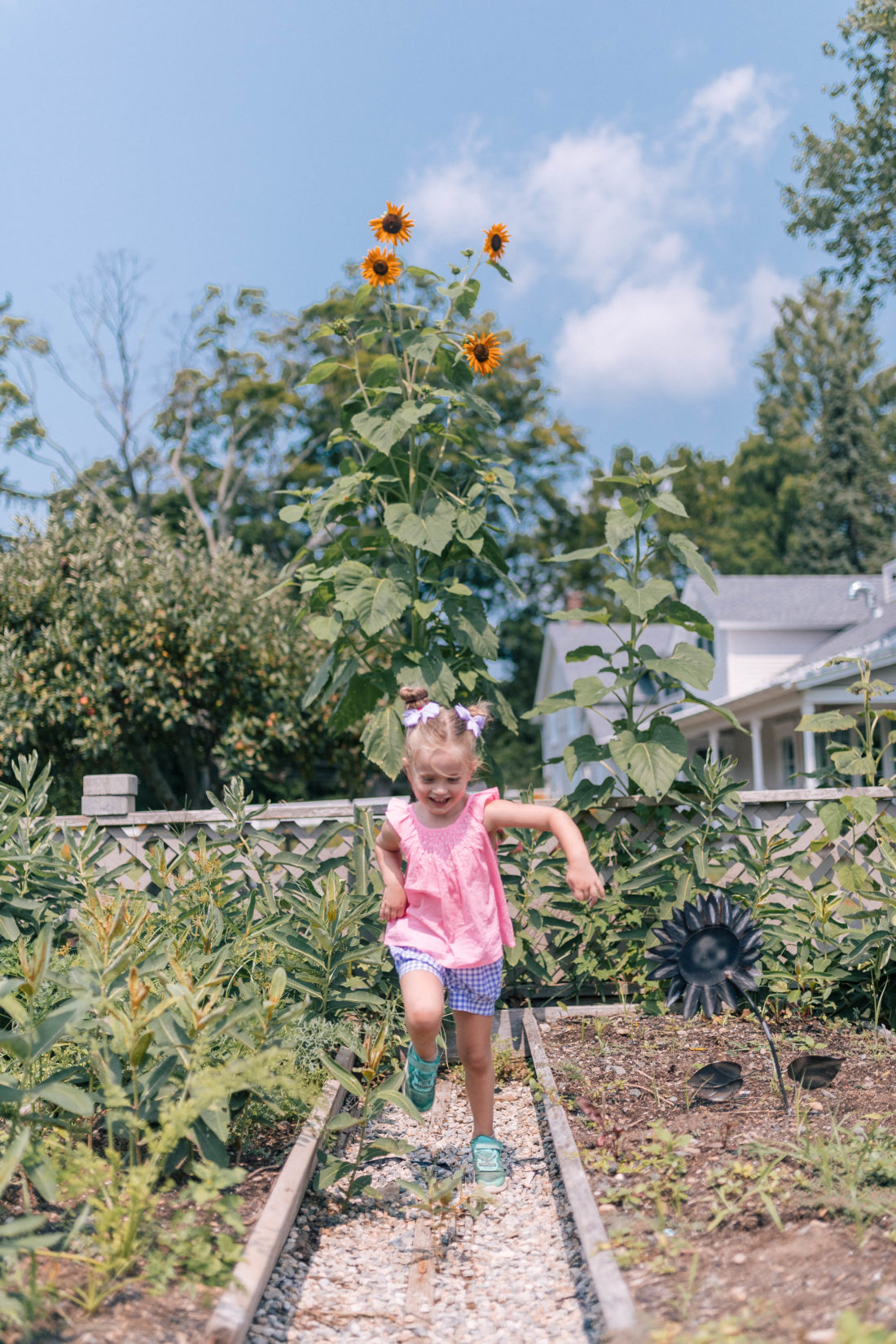 Marlowe Martino wears a pink top and gingham shorts, and picks vegetables in the garden of a local connecticut farm