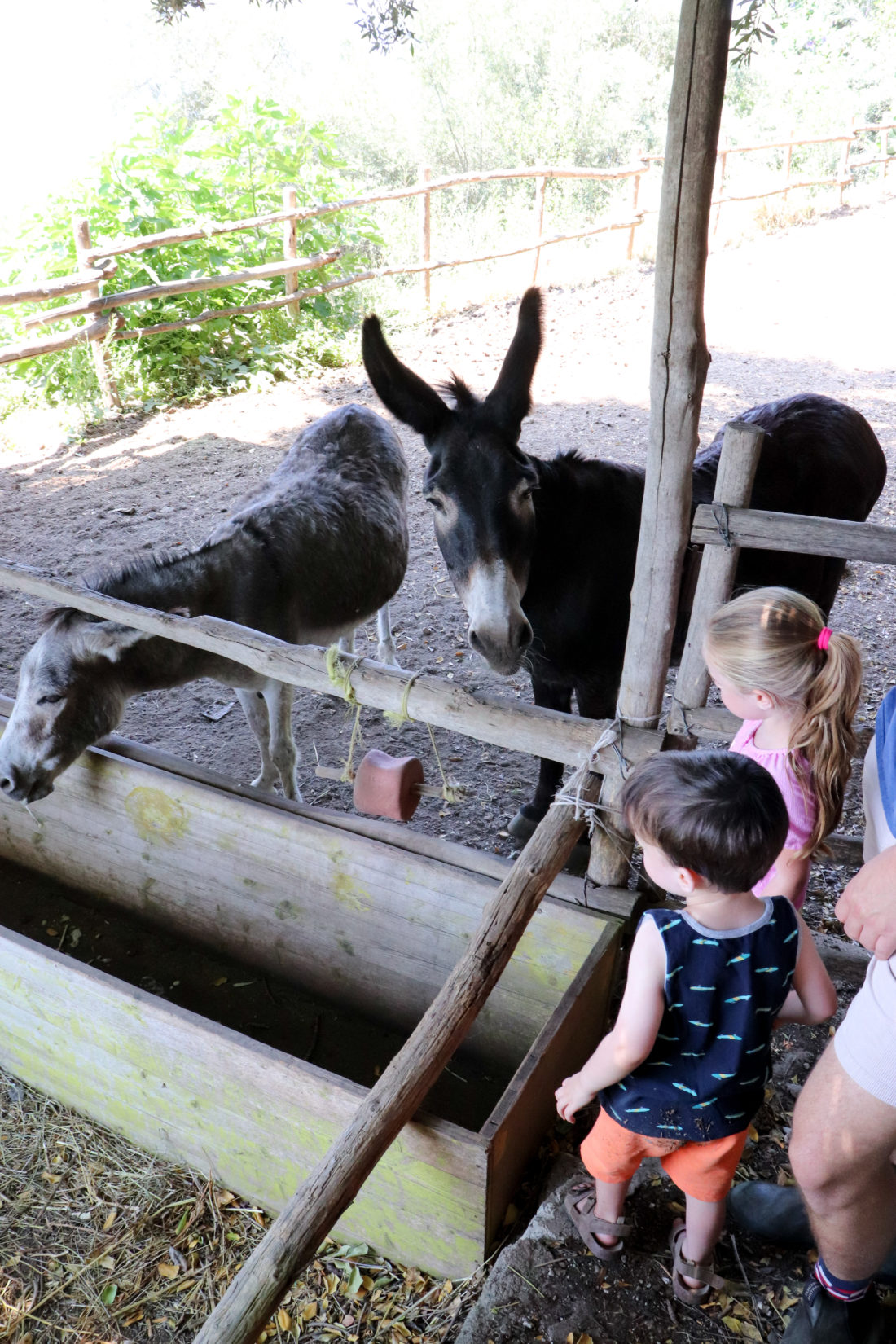 Eva Amurri Martino's children Marlowe and Major pet donkeys in the Amalfi Coast
