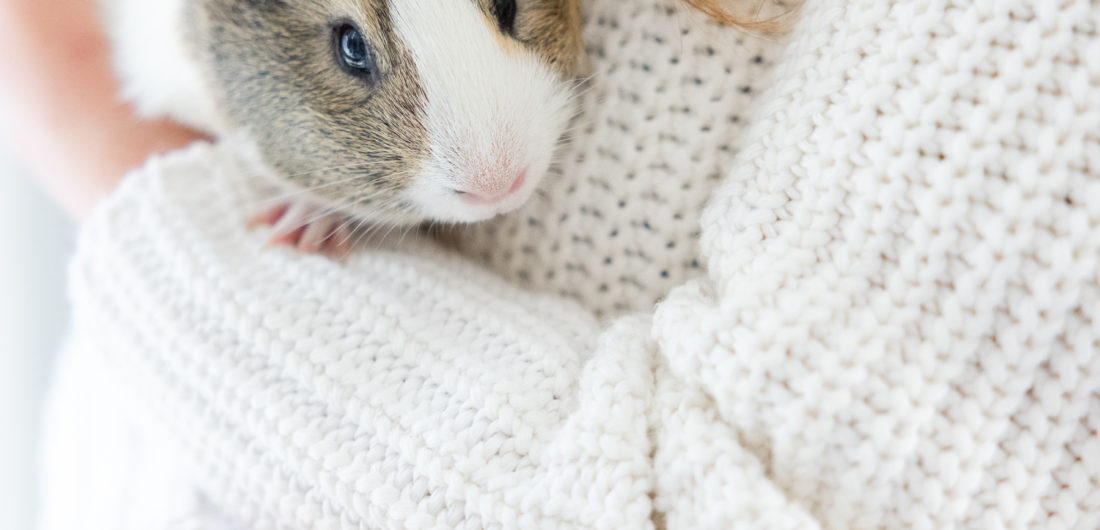 Eva Amurri shares all about her family's new guinea pig